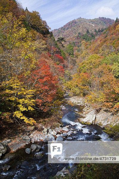 River  autumn  Tochigi  Japan  Asia