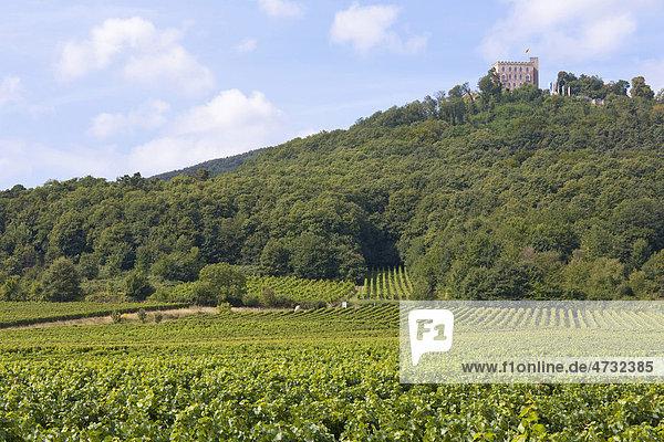 Hambacher Schloss  Weinberge  bei Neustadt an der Weinstraße  Deutsche Weinstraße  Pfalz  Rheinland-Pfalz  Deutschland  Europa