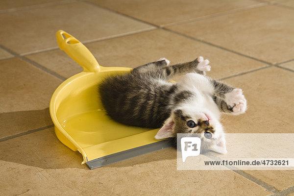 Kätzchen spielt mit Kehrschaufel