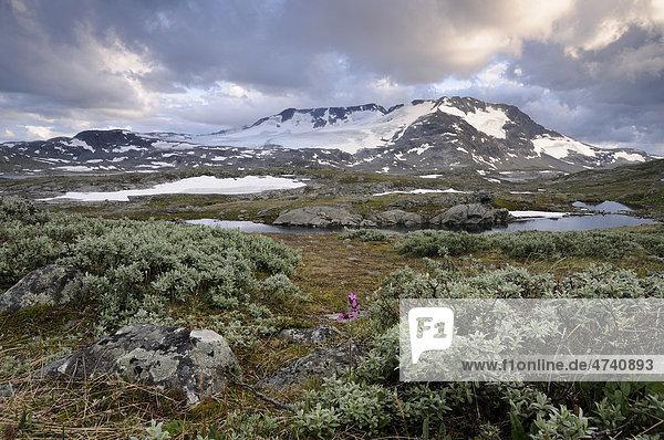 Blick auf den Fannaraki und Fannarakbreen  Gebirgslandschaft im Jotunheimen Nationalpark  Norwegen  Skandinavien  Europa