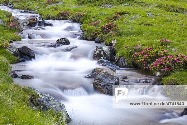 Fließender Bach auf der Alm  Ulten  Ultental  Südtirol  Italien  Europa Fließender Bach auf der Alm, Ulten, Ultental, Südtirol, Italien, Europa