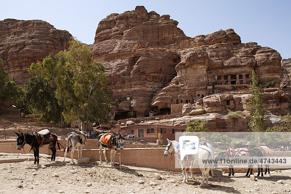 Donkeys  trees and a restaurant  Petra  the capital city of the Nabataeans  rock city  UNESCO World Hertage Site  Wadi Musa  Hashemite Kingdom of Jordan  Orient  Middle East  Asia