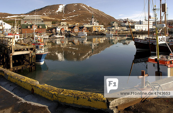 Port of Husavik  whale watching town in northern Iceland  Iceland  Europe