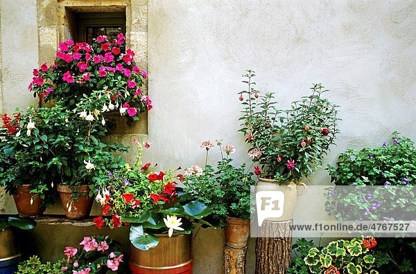 Blooming flowers in pots  Puy-l´Eveque  France