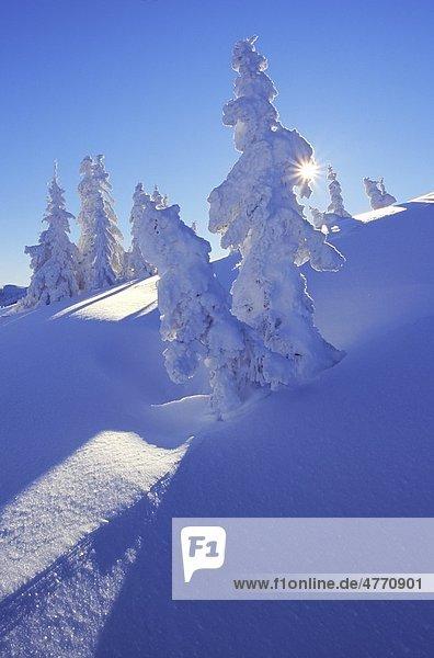 Winterwald am Fuß des Hochkönigs  Salzburger Land  Österreich