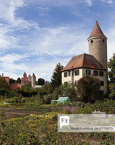 Blick auf die Altstadt mit dem Hertelsturm und Krugsturm  Dinkelsbühl  Landkreis Ansbach  Mittelfranken  Bayern  Deutschland  Europa