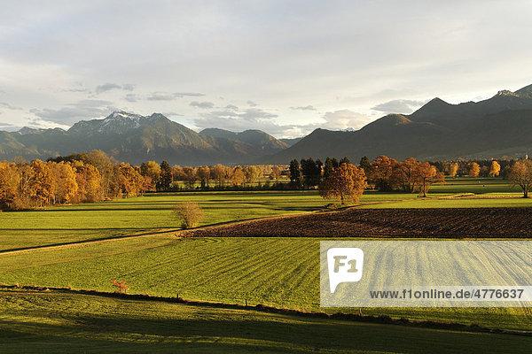 Herbstliche Landschaft  Chiemgau  Oberbayern  Bayern  Deutschland  Europa