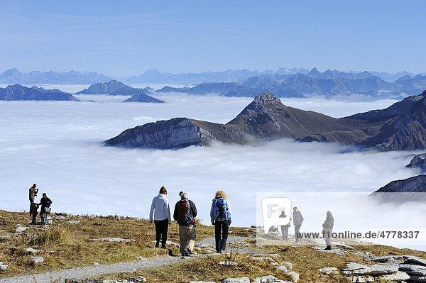 Hikers on Chaeserrugg Mountain looking over a sea of fog seen towards the Alpstein Mountains  Arth Goldau  Schwyz  Switzerland  Europe
