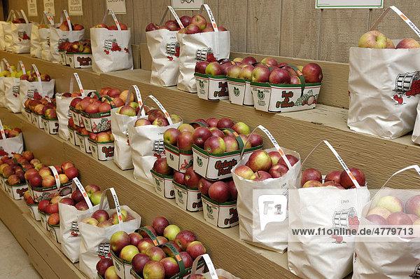 Organische Mcintosh-Äpfel auf einem Marktstand  Markham  Ontario  Kanada