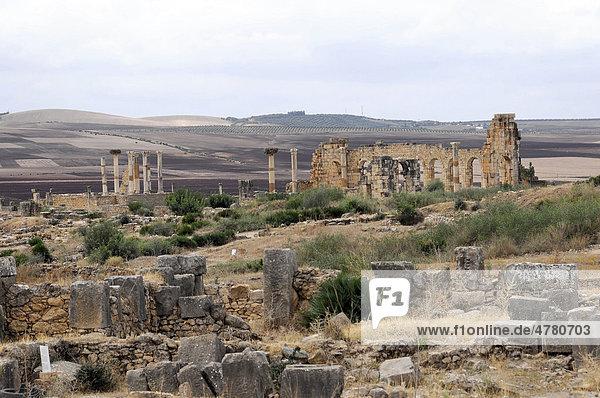 Ruinen der Basilika  archäologische Ausgrabung der antiken römischen Stadt Volubilis  UNESCO-Weltkulturerbe  Marokko  Afrika