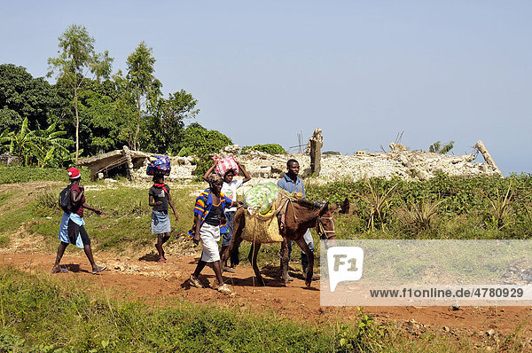 Earthquake refugees walking with a heavily loaded donkey past a house that was destroyed by the January 2010 earthquake  Jacmel  Haiti  Caribbean  Central America
