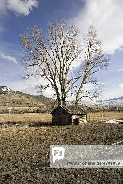 Alte Blockhütte in der Nähe von Gardiner  Gallatin National Forest  Montana  USA  Nordamerika