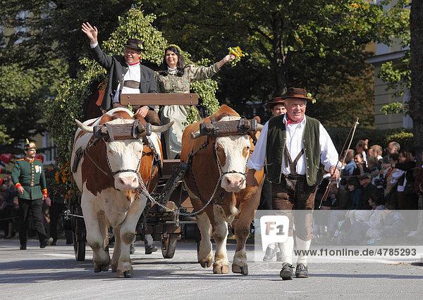 Historischer Bierwagen von Ochsen gezogen  Trachtenumzug  Trachten- und Schützenzug zum Oktoberfest  Oktoberfesteinzug  München  Oberbayern  Bayern  Deutschland  Europa