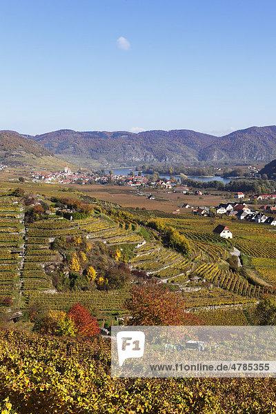 Weißenkirchen in der Wachau  Donau  herbstliche Kulturlandschaft mit Weinbergen  Waldviertel  Niederösterreich  Österreich  Europa