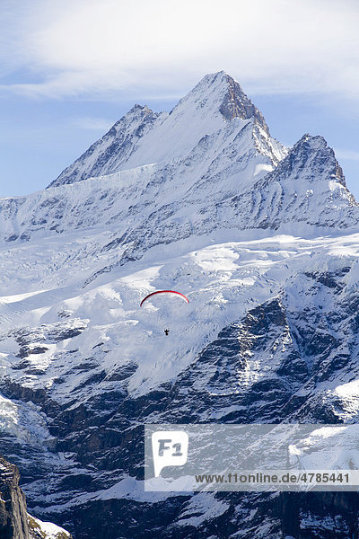 Schreckhorn mit Gleitschirmflieger  Grindelwald  Berner Oberland  Kanton Bern  Schweiz  Europa