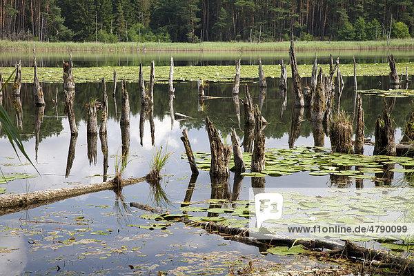 Lake Muehlen  Mueritz National Park  Mecklenburg-Western Pomerania  Germany  Europe