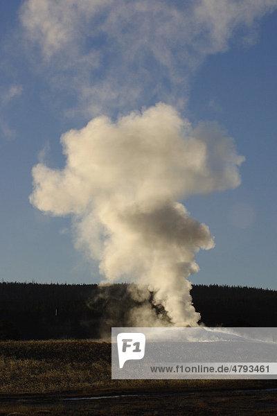 Ausbruch des Old Faithful Geysir  Yellowstone-Nationalpark  Wyoming  USA