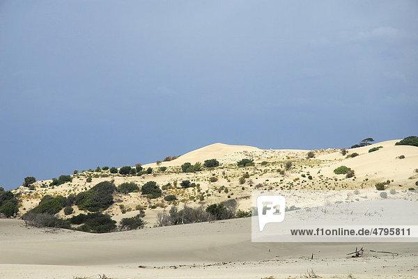 Dünen am Patara Strand  lykische Küste  Provinz Antalya  Mittelmeer  Türkei  Eurasien