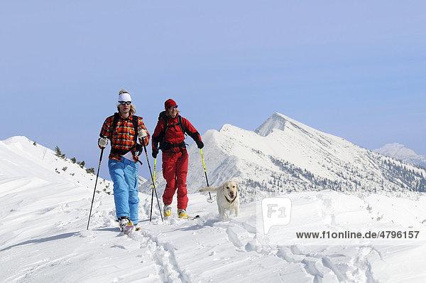Skifahrer auf Skitour auf das Dürrnbachhorn  Reit im Winkl  Chiemgau  Oberbayern  Deutschland  Europa