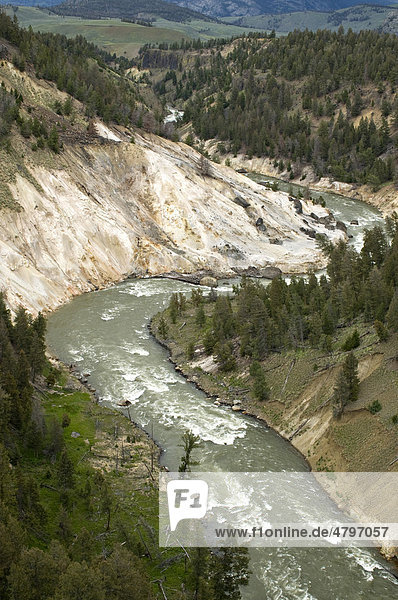 Yellowstone River bei Tower Fall  Yellowstone Nationalpark  Wyoming  USA  Nordamerika