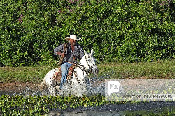 Pantanal Cowboy reitet Pantaneiro-Pferd durch Wasser  Pantanal  Brasilien  Südamerika