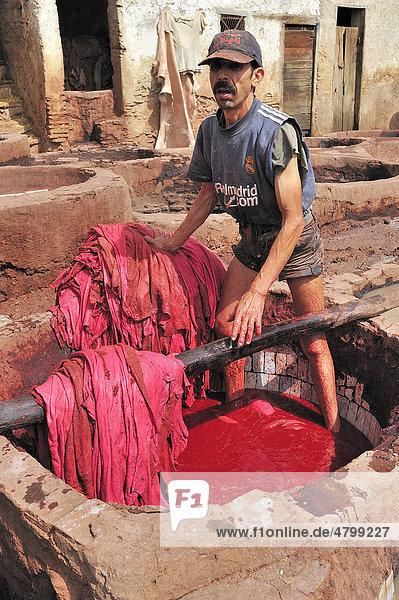 Ein Arbeiter steht in einer Gerberei in einem Bottich mit roter Farbe zum Färben der Leder  Gerber- und Färberviertel  FËs  Marokko  Afrika