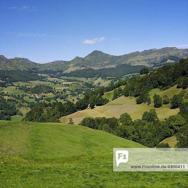Berg Monts du Cantal  DÈpartement Cantal  Region Auvergne  Frankreich  Europa