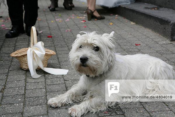 Hund bei einer Hochzeitsfeier