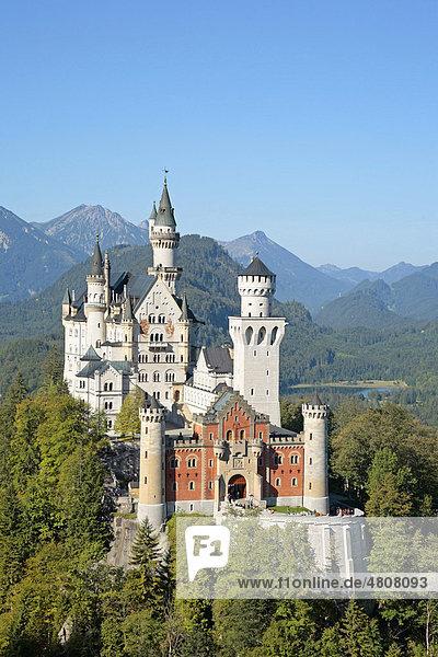 Schloss Neuschwanstein  Bayern  Deutschland  Europa