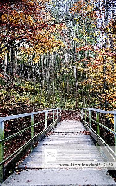 Bachüberquerung an einem Waldweg Nähe Kloster Andechs  Oberbayern  Deutschland  Europa