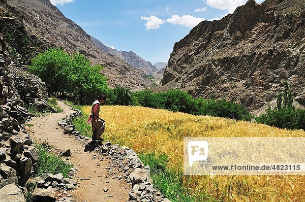 Tiny remote village where surrounded desolate mountains Village seem like a oasis Women at the little space of oat field where they cultivate