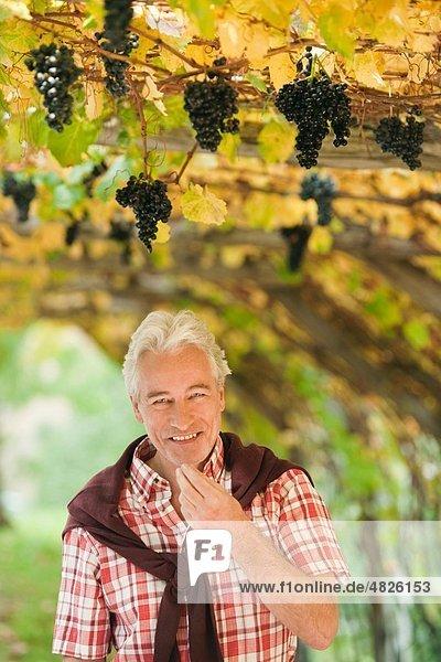 Italien  Südtirol  reifer Mann am Weinstock stehend  lächelnd  Portrait