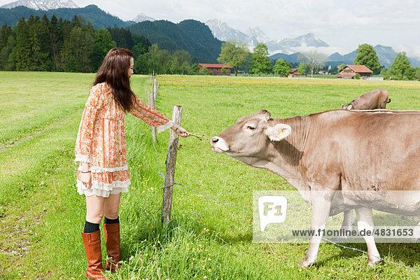 Frau füttert Kuh  Bayern  Deutschland