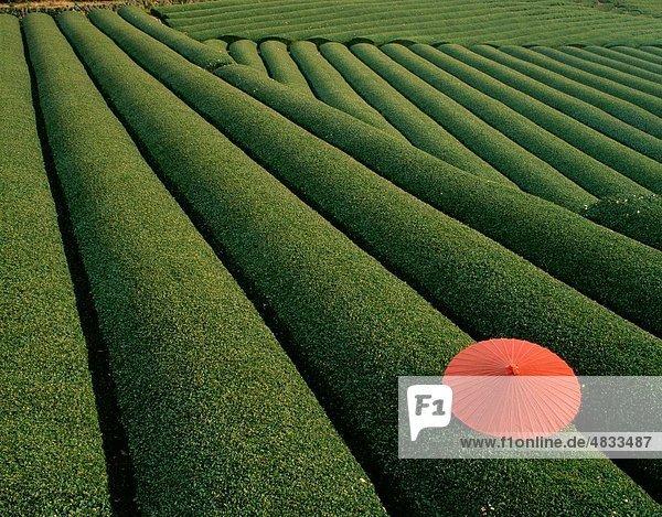 Landwirtschaft  Asien  Kontrast  Felder  grün  Urlaub  Japan  Landmark  Labyrinth  Muster  Muster  rot  Wiederholung  Wiederholungen  Zeile