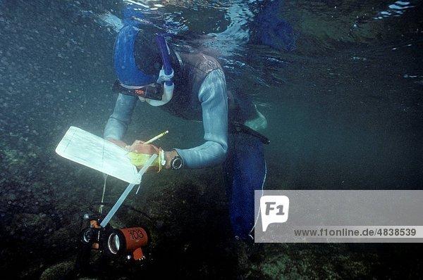 Researcher recording data underwater Homo sapiens Galapagos Islands  Ecuador