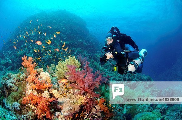 Mixed gas rebreather diver on coral reef Red Sea
