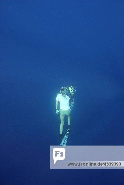 Unterwasseraufnahme  Forscher  schnorcheln  Indischer Ozean  Indik  Seychellen  Hai  Wal