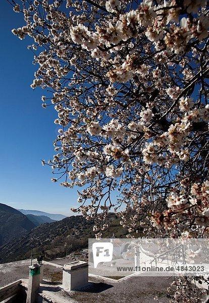Landschaft  Stadt  blühen  Fokus auf den Vordergrund  Fokus auf dem Vordergrund  Ansicht  Mandel  Andalusien  Granada  Spanien