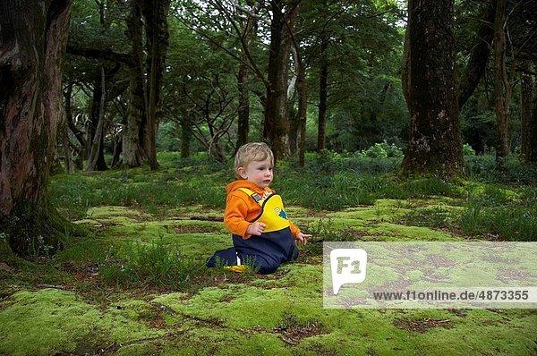 Erde  Erdreich  Boden  Wald  Steinschlag  Moos  Baby