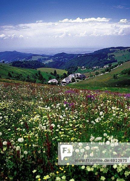 Blume Wald schwarz Feld