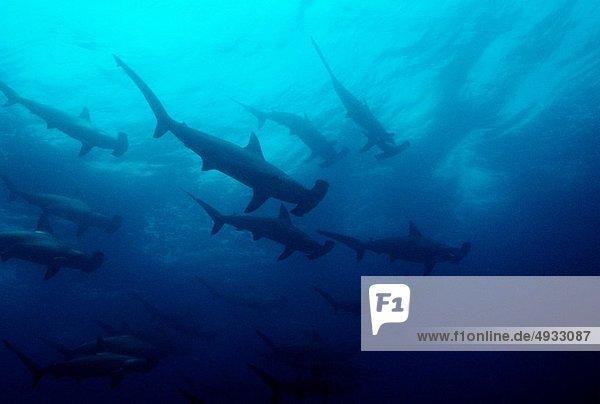 Galapagosinseln  Ecuador  Pazifischer Ozean  Pazifik  Stiller Ozean  Großer Ozean