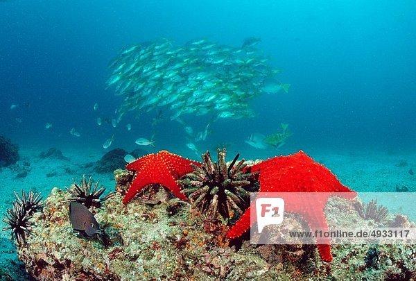 Pazifischer Ozean  Pazifik  Stiller Ozean  Großer Ozean  Mexiko  Baja California