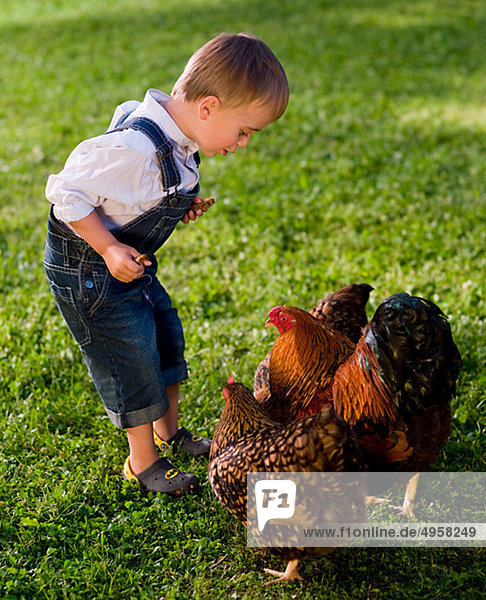 Junge spielt mit Huhn Junge spielt mit Huhn