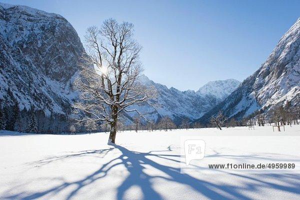 Deutschland  Bayern  Baumschatten auf der Winterlandschaft im Karwendelgebirge
