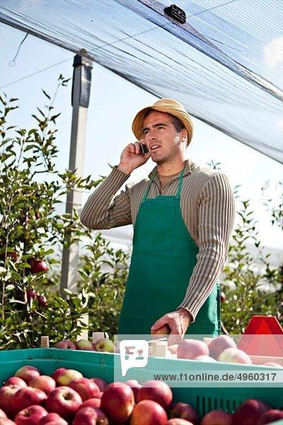 Kroatien  Baranja  Junger Mann mit Behälter voller Äpfel und Telefongespräch Kroatien, Baranja, Junger Mann mit Behälter voller Äpfel und Telefongespräch