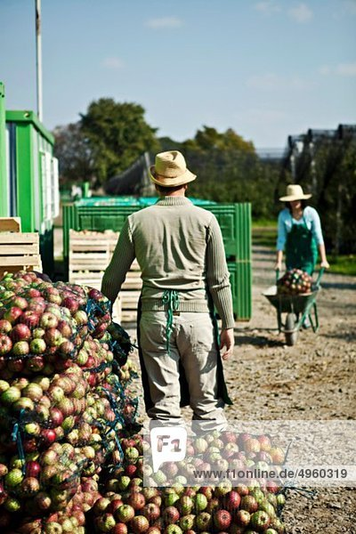 Kroatien  Baranja  Junge Frau mit Äpfeln im Schubkarren  Mann steht im Vordergrund