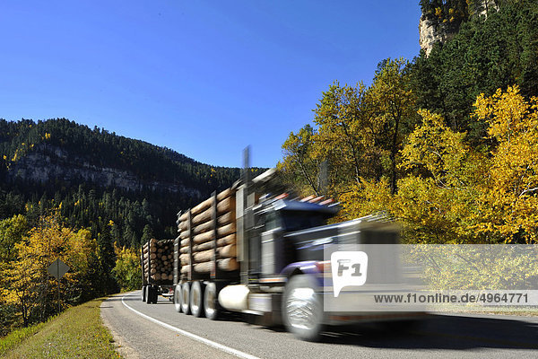 USA  South Dakota  Black Hills National Forest  Spearfish Canyon  LKW