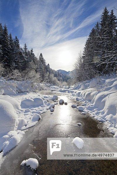 Bach im Flachgau im Winter  Salzburger Land  Österreich