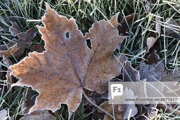 Close-up of frosty leaf