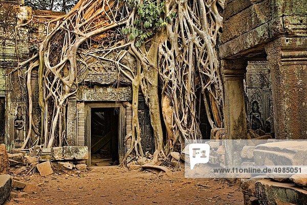Baum Eingang über Wachstum Ruine antik Baum,Eingang,über,Wachstum,Ruine,antik
